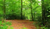 Randonnée Marche COYOLLES - en forêt de Retz_78_les rayons du Rond Capitaine - Photo 141