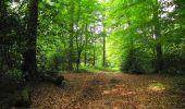 Randonnée Marche COYOLLES - en forêt de Retz_78_les rayons du Rond Capitaine - Photo 140