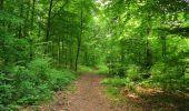 Randonnée Marche COYOLLES - en forêt de Retz_78_les rayons du Rond Capitaine - Photo 14
