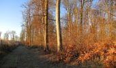Trail Walk SAINT-JEAN-AUX-BOIS - en forêt de Compiègne_33_12_2019_les Tournantes de l'étang Saint-Jean et des Prés Saint-Jean - Photo 199