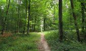 Randonnée Marche SAINT-JEAN-AUX-BOIS - en forêt de Compiègne_2_ruines gallo-romaines de Champlieu_les Petits Monts - Photo 112