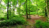 Randonnée A pied VILLERS-COTTERETS - le GR11A  dans la Forêt de Retz  - Photo 73