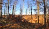 Trail Walk PIERREFONDS - en forêt de Compiègne_24_Tournantes sur le Voliard et sur la Fortelle_chaussée Brunehaut - Photo 118