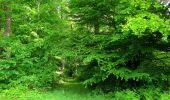 Randonnée Marche COYOLLES - en forêt de Retz_78_les rayons du Rond Capitaine - Photo 47