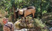 Randonnée Marche SAINT-PIERRE-LES-NEMOURS - balade avec un bouc - Photo 1
