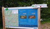 Randonnée Marche PHILIPPSBOURG - chateaux falckenstein - Waldeck - Photo 14