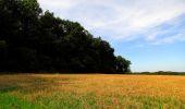 Randonnée Marche HARAMONT - en forêt de Retz_79_08_2019_vers Taillefontaine et Retheuil par les lisières - Photo 87