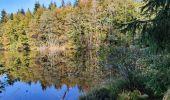 Trail Walk ECROMAGNY - Les 1000 étangs à Ecromagny - Photo 9
