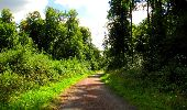 Randonnée A pied VILLERS-COTTERETS - le GR11A  dans la Forêt de Retz  - Photo 81