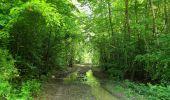 Randonnée Marche COYOLLES - en forêt de Retz_78_les rayons du Rond Capitaine - Photo 100