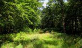 Randonnée Marche LACROIX-SAINT-OUEN - en forêt de Compiègne_35_la Croix Saint-Sauveur_le Ru du Goderu - Photo 103