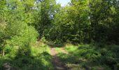 Randonnée Marche LACROIX-SAINT-OUEN - en forêt de Compiègne_35_la Croix Saint-Sauveur_le Ru du Goderu - Photo 7