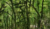 Randonnée Marche SAINT-GERVAIS - Les Gorges du Gorgonnet par le hameau des Monts - Photo 4