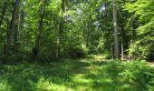Randonnée Marche LACROIX-SAINT-OUEN - en forêt de Compiègne_35_la Croix Saint-Sauveur_le Ru du Goderu - Photo 105