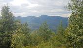 Randonnée Marche MUHLBACH-SUR-BRUCHE - Le Jardin des Fées par la cascade de Soulzbach - Photo 19