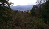Randonnée Marche SENTHEIM - Bucherg - Photo 12