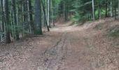 Randonnée Marche NIEDERBRUCK - niederbruck lochberg circuit - Photo 9