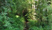 Randonnée Marche LACROIX-SAINT-OUEN - en forêt de Compiègne_35_la Croix Saint-Sauveur_le Ru du Goderu - Photo 37