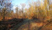 Trail Walk SAINT-JEAN-AUX-BOIS - en forêt de Compiègne_33_12_2019_les Tournantes de l'étang Saint-Jean et des Prés Saint-Jean - Photo 61
