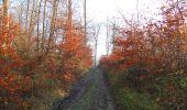 Trail Walk SAINT-JEAN-AUX-BOIS - en forêt de Compiègne_33_12_2019_les Tournantes de l'étang Saint-Jean et des Prés Saint-Jean - Photo 6