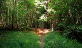 Randonnée Marche SAINT-JEAN-AUX-BOIS - en forêt de Compiègne_6_les Grands Monts_la route tournante sur la tête St-Jean - Photo 142