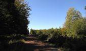 Trail Walk DAMPLEUX - en forêt de Retz_80_sur la Route Tortue et la Route Droite - Photo 300