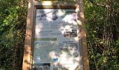 Randonnée Marche BARGEMON - Le bois de ciste - Photo 9