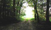 Randonnée A pied VILLERS-COTTERETS - le GR11A  dans la Forêt de Retz  - Photo 157