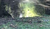 Randonnée Marche Fond Bertrand - Gosier gros monbin  - Photo 3