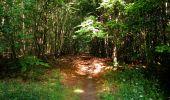 Randonnée Marche SAINT-JEAN-AUX-BOIS - en forêt de Compiègne_6_les Grands Monts_la route tournante sur la tête St-Jean - Photo 144