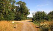 Randonnée Marche LACROIX-SAINT-OUEN - en forêt de Compiègne_35_la Croix Saint-Sauveur_le Ru du Goderu - Photo 28