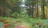 Randonnée A pied VILLERS-COTTERETS - le GR11A  dans la Forêt de Retz  - Photo 115