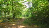 Randonnée Marche LACROIX-SAINT-OUEN - en forêt de Compiègne_35_la Croix Saint-Sauveur_le Ru du Goderu - Photo 78