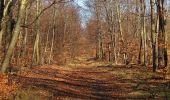 Trail Walk PIERREFONDS - en forêt de Compiègne_24_Tournantes sur le Voliard et sur la Fortelle_chaussée Brunehaut - Photo 25