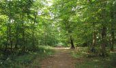 Randonnée Marche LACROIX-SAINT-OUEN - en forêt de Compiègne_35_la Croix Saint-Sauveur_le Ru du Goderu - Photo 75
