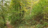Trail Walk Viroinval - De Nismes à Petigny par le Tienne du Lion - Photo 4