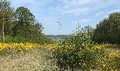 Randonnée Marche Rochefort - Croix du chariot vers Chapelle reine Astrid  - Photo 8