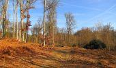 Trail On foot VIEUX-MOULIN - en forêt de Compiègne_23_la Grotte des Ramoneurs_le Mont Berny - Photo 12