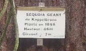 Randonnée Marche MUHLBACH-SUR-BRUCHE - Le Jardin des Fées par la cascade de Soulzbach - Photo 11
