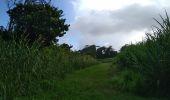 Trail Walk BASSE-POINTE - SALLE DES FÊTES-EYMA-TAPIS VERT-MOULIN L'ÉTANG en boucle - Photo 6