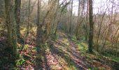 Randonnée A pied VILLERS-COTTERETS - le GR11A  dans la Forêt de Retz  - Photo 140