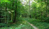 Trail Walk DAMPLEUX - en forêt de Retz_80_sur la Route Tortue et la Route Droite - Photo 168