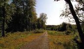 Trail Walk DAMPLEUX - en forêt de Retz_80_sur la Route Tortue et la Route Droite - Photo 159