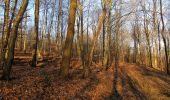 Trail Walk PIERREFONDS - en forêt de Compiègne_24_Tournantes sur le Voliard et sur la Fortelle_chaussée Brunehaut - Photo 97