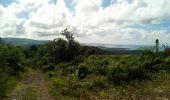 Trail Walk RIVIERE-SALEE - JOUBADIÈRE - MORNE CONSTANT - PAGERIE - Photo 44
