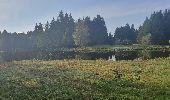 Trail Walk ECROMAGNY - Les 1000 étangs à Ecromagny - Photo 4