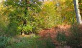 Randonnée Marche SAINT-JEAN-AUX-BOIS - en forêt de Compiègne_32_11_2019_les Tournantes de la Muette et sous la Tête Saint-Jean - Photo 177