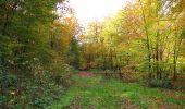 Randonnée Marche SAINT-JEAN-AUX-BOIS - en forêt de Compiègne_32_11_2019_les Tournantes de la Muette et sous la Tête Saint-Jean - Photo 189