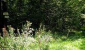 Trail Walk DAMPLEUX - en forêt de Retz_80_sur la Route Tortue et la Route Droite - Photo 304