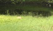 Randonnée Marche Fond Bertrand - Gosier gros monbin  - Photo 2